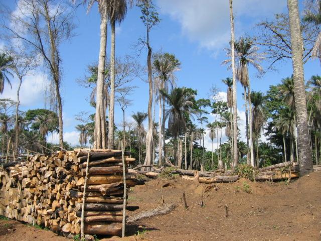 Forêt ougandaise - IRIN