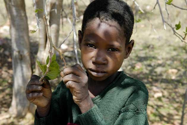 Enfant zimbabwéen se nourrissant de feuilles de mûrier (photo The Independent)